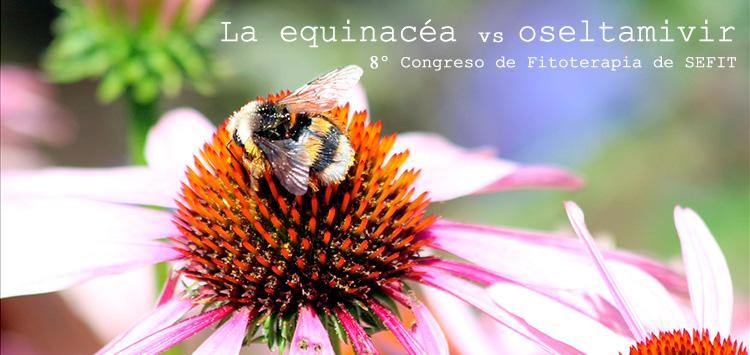 la_equinacea